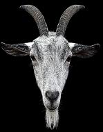 horns-457849_1920